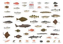 atlantic ocean fish identification