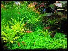 Fluval Edge Aquascape My Own Two Fluval Edge 46 Lit Aquascape Fluval Edge 46 Pinterest