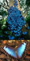 49 best butterflies images on pinterest beautiful butterflies