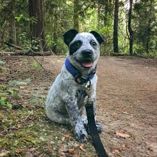 there are more dogs named frodo than fido in seattle kuow news