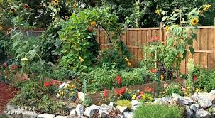 5 ways to spice up your vegetable garden this year
