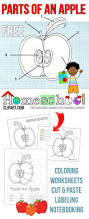 free parts of an apple activity worksheets this set includes