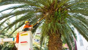 pruning and removing trees city of sydney