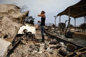 California Wildfire Animal Rescue by At Least 150 Homes Destroyed In Deadly California Wildfire Cbs News