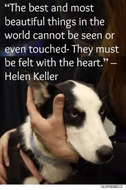 Beautiful Quotes About Life And Love by 278 Best Quotes About Dogs Images On Pinterest Dog Quotes