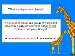 dependent clause digicore safari classroom pinterest