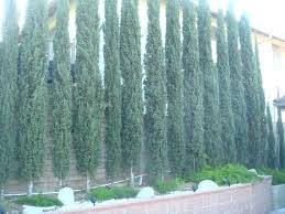 cypress privacy screen interior design companies near me