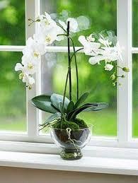 Fragrant Indoor House Plants - top fragrant houseplants orange blossom low lights and indoor