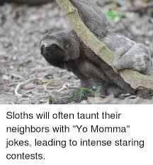 Sloth Jokes Meme - sloths will often taunt their neighbors with yo momma jokes leading