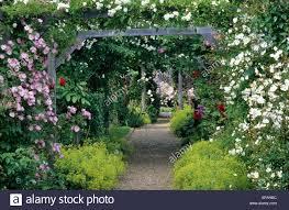 mannington hall norfolk rose arbour wooden garden arch