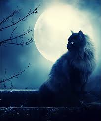 a witch s black cat at with a moon
