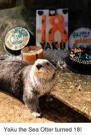 Sea Otter Meme - yaku the sea otter turned 18 otter meme on esmemes com