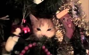 cats stuck in christmas trees youtube