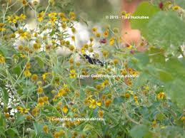 texas native plants nursery texas native plant week what u0027s next my gardener says u2026