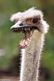 Ostrich Meme - ostrich dinosaur pictures freaking news