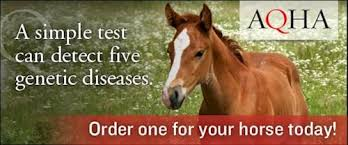 How To Tell If A Horse Is Blind Aqha Genetic Testing
