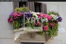 beautiful balcony full of flowers image yayimages com