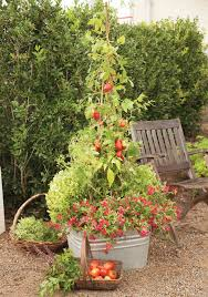 vegetable garden sun requirements ay mag ay is about you p allen smith boon companions
