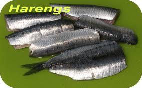 cuisiner le hareng dictionnaire de cuisine et gastronomie hareng