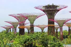 photos walk atop the treetops at singapore u0027s gardens by the bay