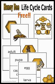 free honey bee life cycle cards preschool powol packets