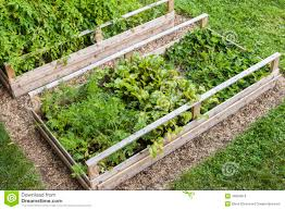 raised vegetable garden stock photo image 41504634