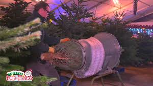 natural nordmann fir christmas trees at tulleys farm youtube