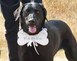 dog ring bearer pillow dogs ring bearer search wedding planning