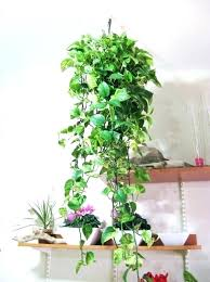 plant wall hangers indoor plant wall hangers indoor full image for indoor wall hanging herb