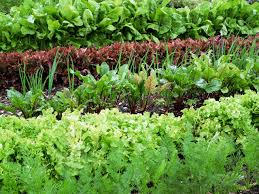 Manure For Vegetable Garden by Preparing Soil And Yard For Planting A Vegetable Garden Hgtv