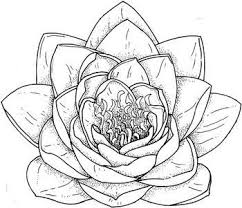 Flower Drawings Black And White - best 25 flowers to draw ideas on pinterest how to draw flowers