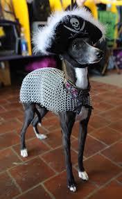 87 best italian greyhound costume images on pinterest italian