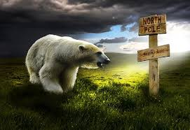 bear free pictures pixabay