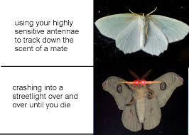 Moth Meme - tumblr