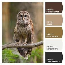65 best color palette images on pinterest color palettes color