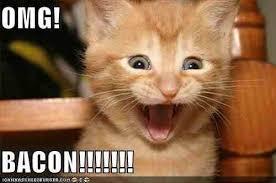 Omg Cat Meme - omg cat bacon album on imgur