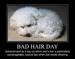 Bad Hair Day Meme - zoe meme 57 bad hair day walking through this together
