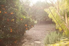 what is permaculture dave u0027s organic gardening in santa barbara