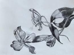 tulip flower drawing by monika