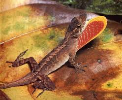 growing more butterflies in south east queensland gecko hills to many lizard species have complex interactions to facilitate
