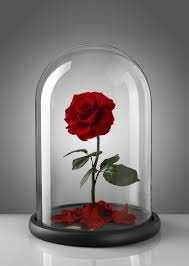 How To Make Roses Live Longer In A Vase How To Make Roses Live Longer Popsugar Home Middle East