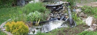 miniteich im fass selber bauen und bepflanzen bei westfalia