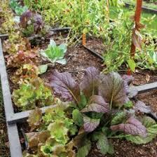 growing vegetables in the desert phoenix home u0026 garden