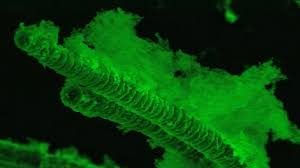 algae is the superfood of the future business insider