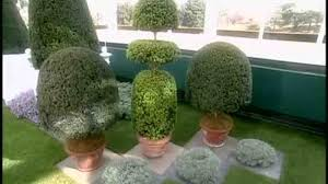 Topiary Plants Online - video how to start a topiary martha stewart