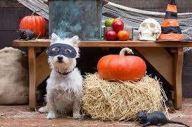 Halloween Pet Costume Halloween Pet Costume Photo Contest Win 3 Step Pet Stool