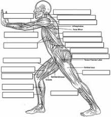 The Human Anatomy Muscles Label Muscles Worksheet Body Muscles Pinterest Muscles