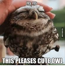 Owl Birthday Meme - 25 best memes about cute owl meme cute owl memes