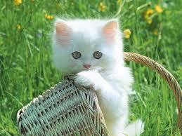 images?qtbnANd9GcRFnsSSRldtM5uQqwvo7BtqsZBcyCcUDtHh7PPshuMdpVqG4KYOKg&ampt1 - Cats