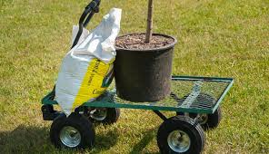 4 tools you need for transplanting trees hobby farms